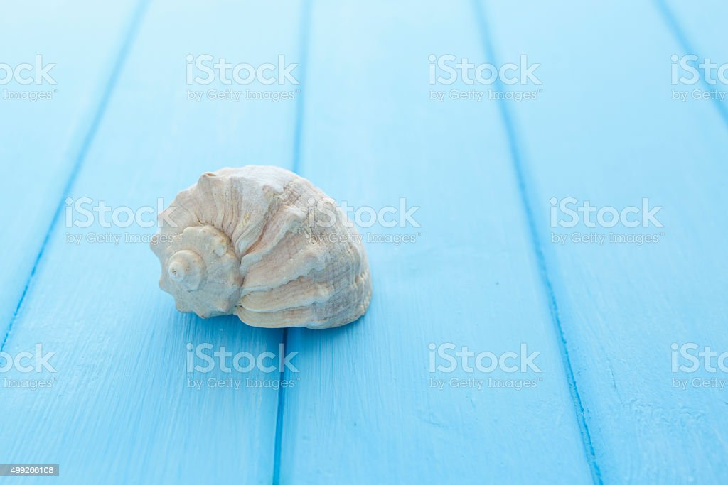 Border pattern of white sea shells on blue wooden table stock photo