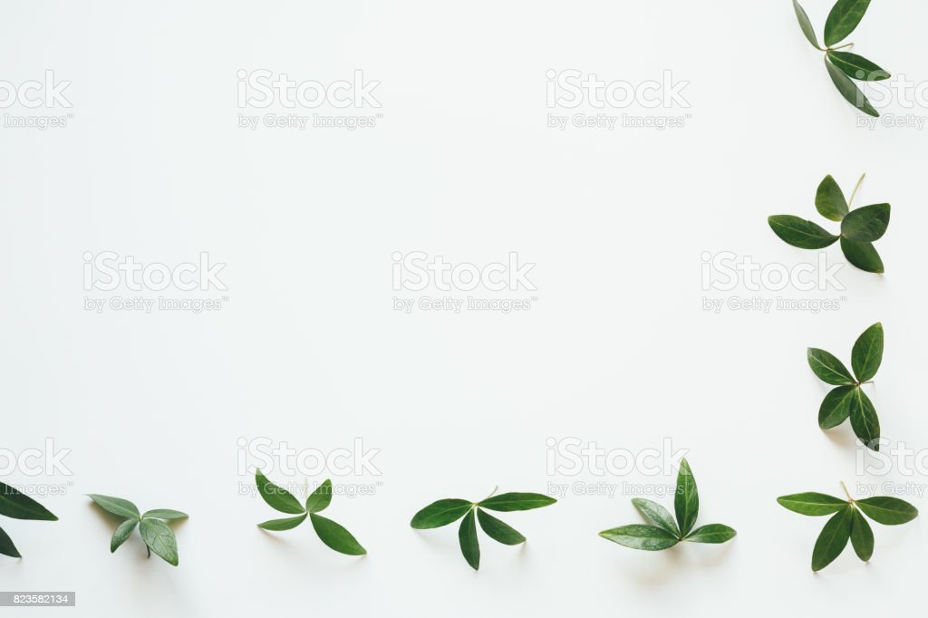Border With Green Leaves On White Background stock photo