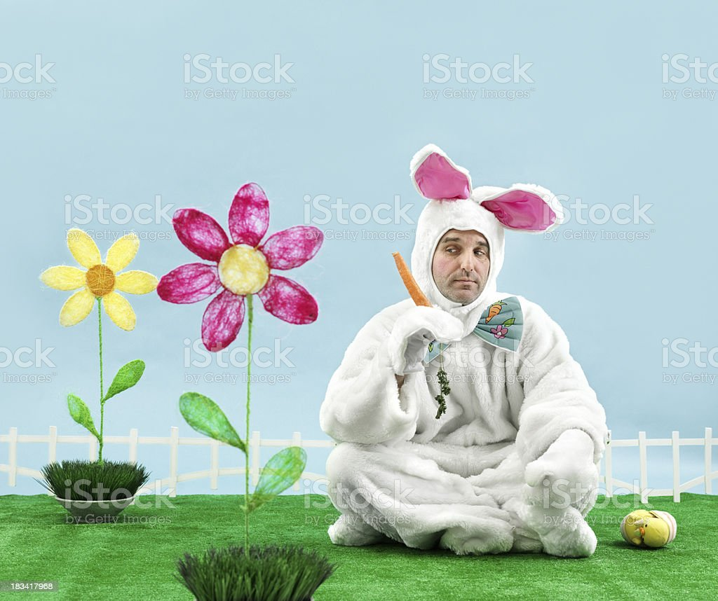 Bored Bunny stock photo