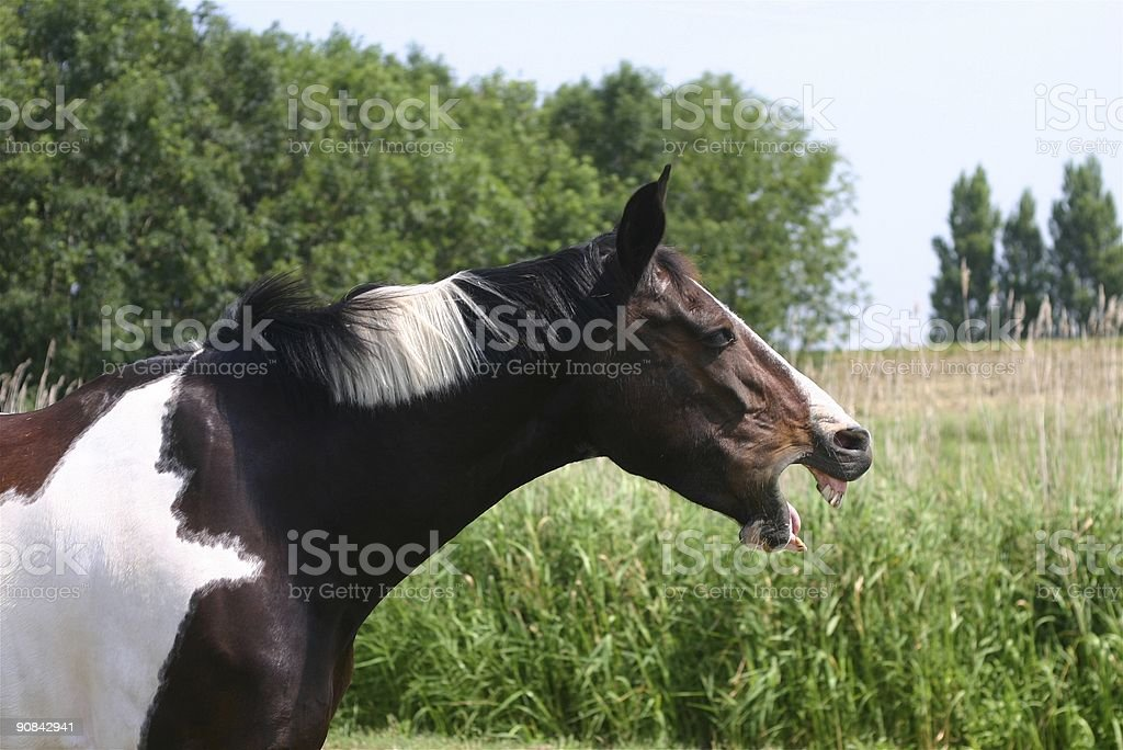 Bored horse stock photo