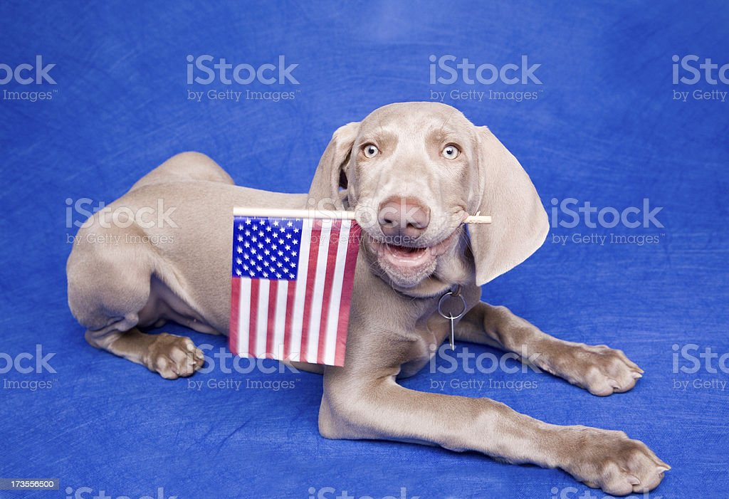 Born In The USA royalty-free stock photo