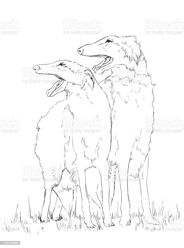 Borzoi dog pencil drawing stock photo