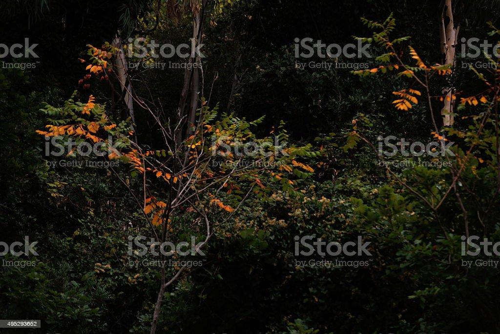 Bosco e colori autunnali mediterranei stock photo
