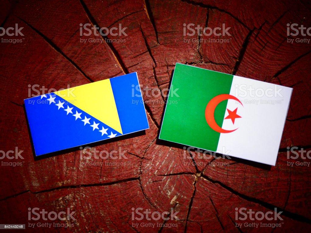 Bosnia and Herzegovina flag with Algerian flag on a tree stump isolated stock photo