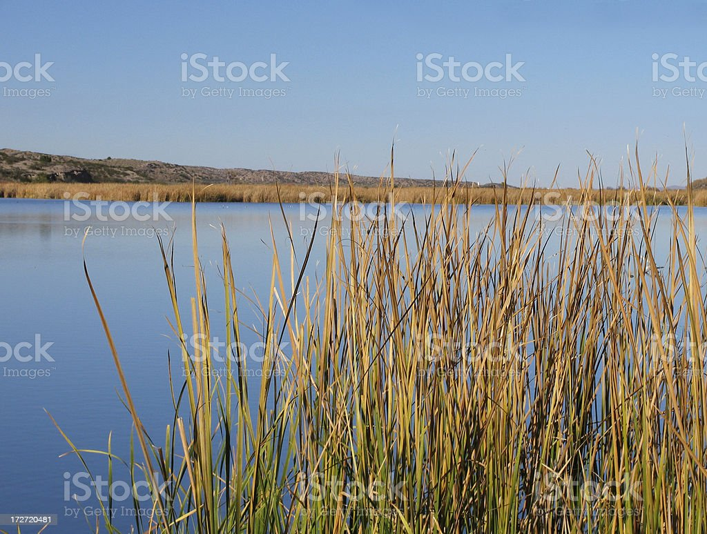 Bosque del Apache Wetlands royalty-free stock photo