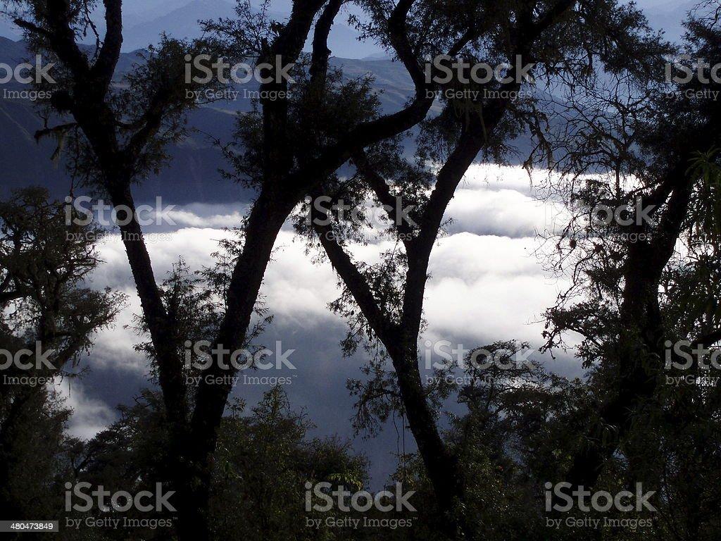 Bosque entre nubes stock photo