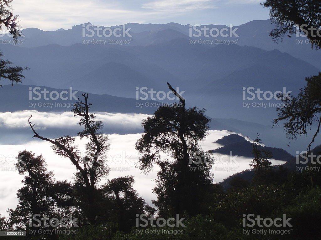 Bosque nuboso stock photo
