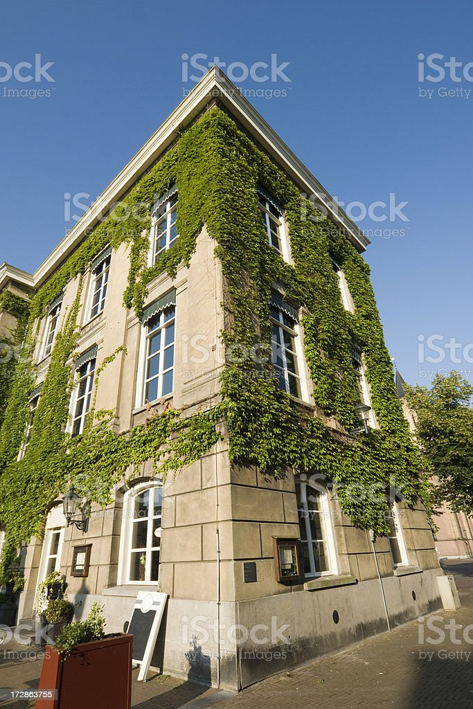 Boston Ivy on old building stock photo