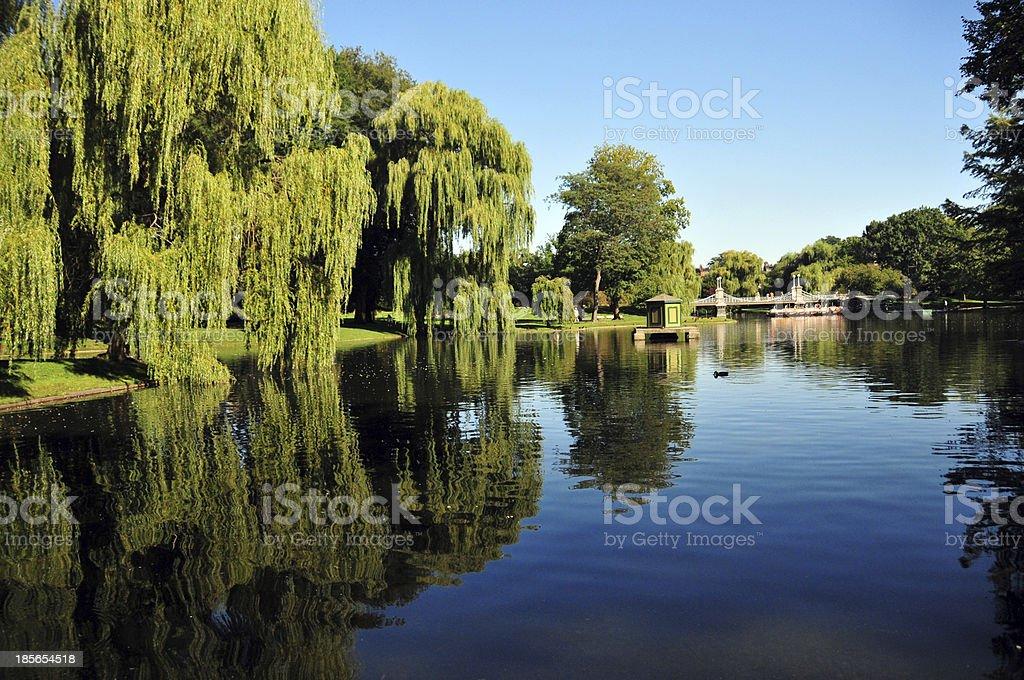 Boston Public Garden - Summer day stock photo