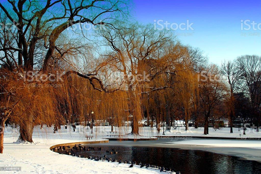 Boston Public Garden winter royalty-free stock photo