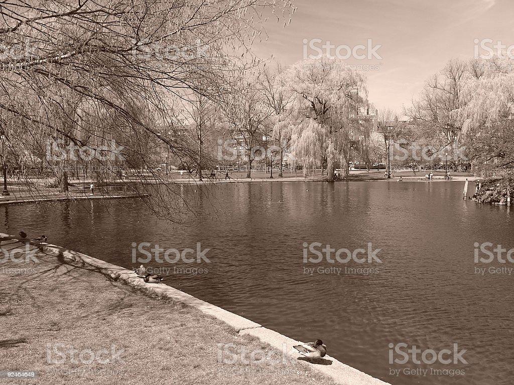 Boston's Public Gardens in the Spring royalty-free stock photo