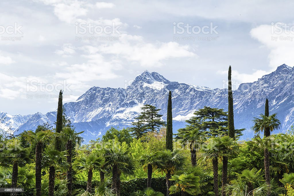 Botanic Garden and Alps stock photo