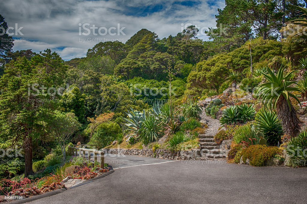 Botanic garden in Wellington, New Zealand stock photo