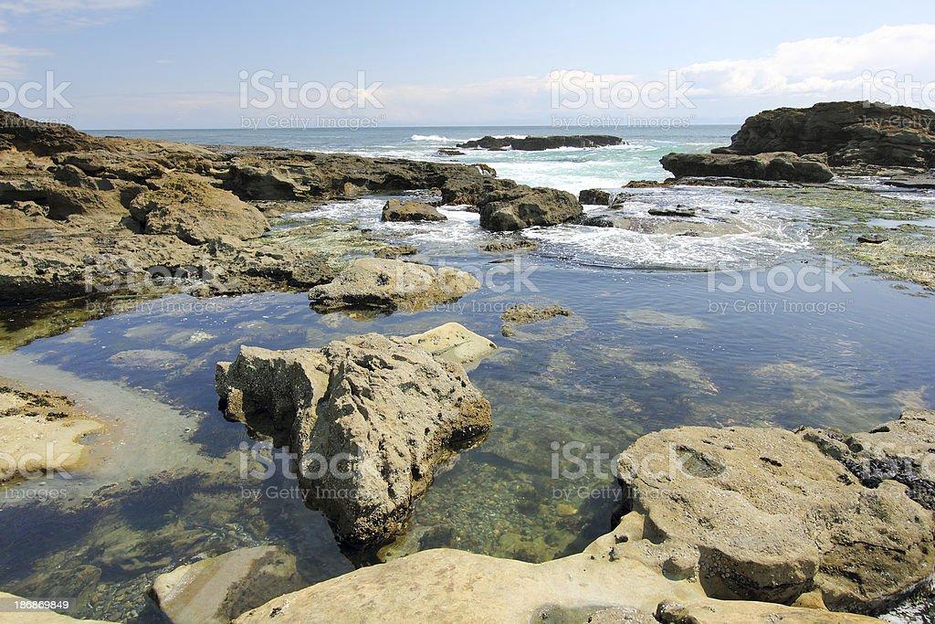 Botanical Beach royalty-free stock photo
