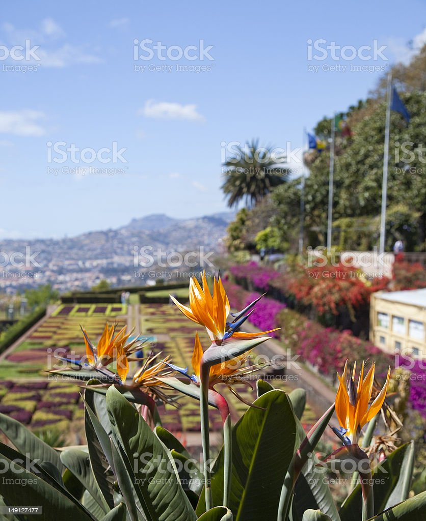 Botanical garden in Madeira royalty-free stock photo