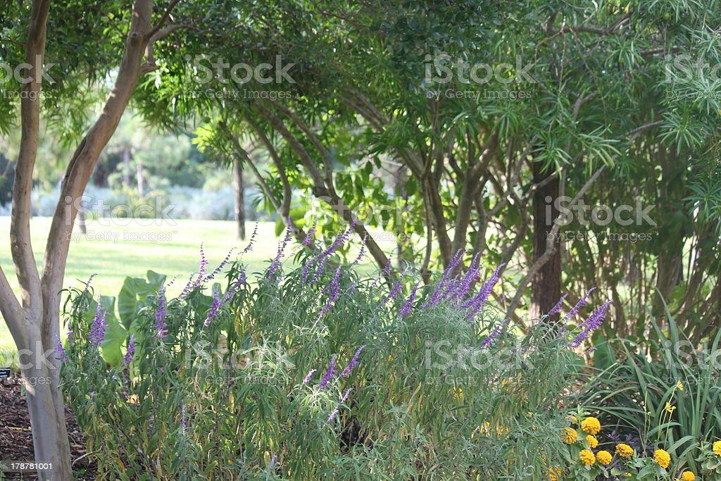 Botanical Garden Landscape royalty-free stock photo