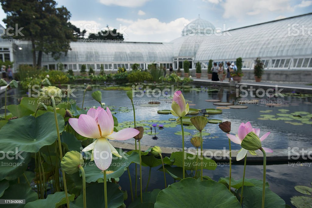 NYC Botanical Garden Lily Pads stock photo