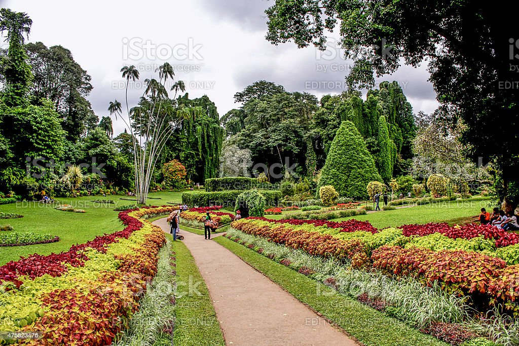 botanical Garden of Peradeniya, Kandi stock photo