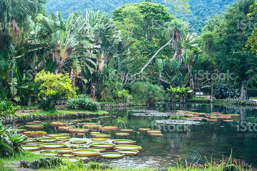 Botanical Garden of Rio de Janeiro, Brazil stock photo