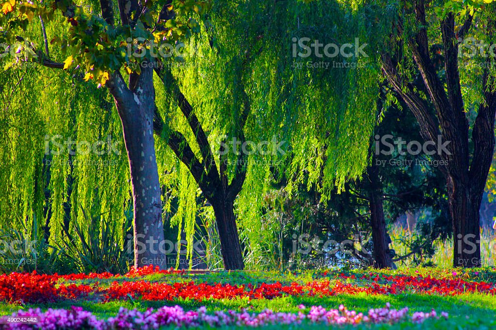 Botanical garden stock photo