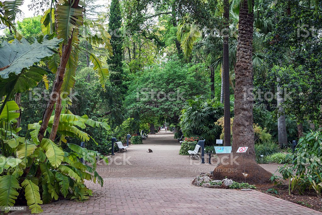 Botanical gardens in Valencia stock photo