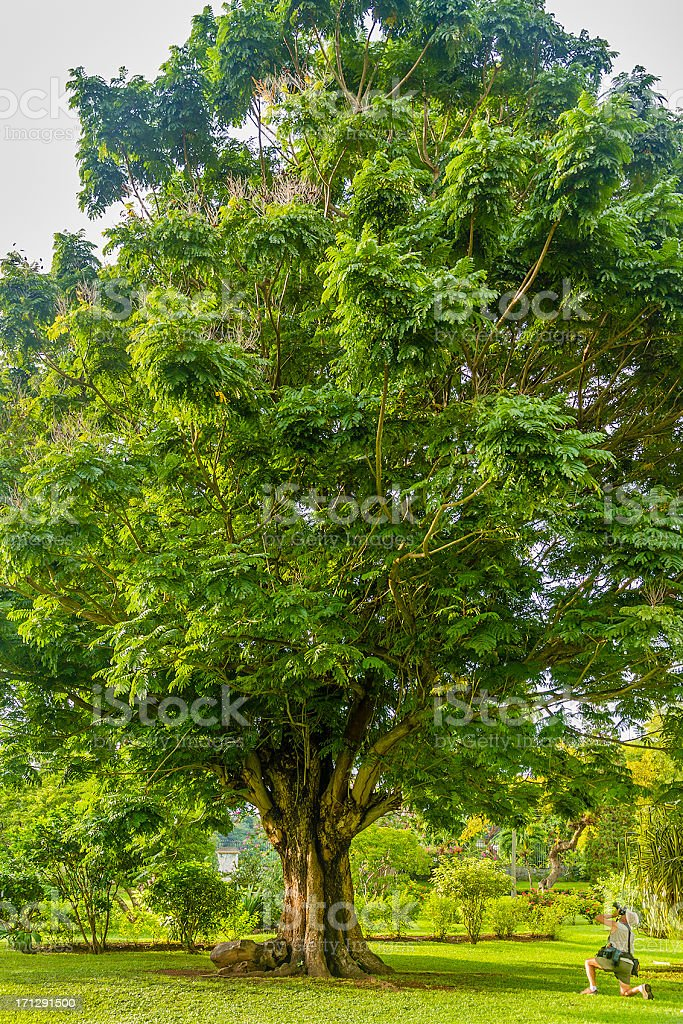 Botanical Gardens of Kingstown, St Vincent royalty-free stock photo