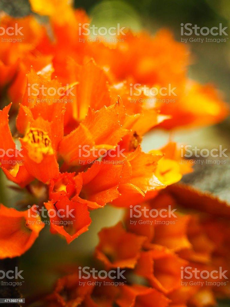 Botanical photo libre de droits