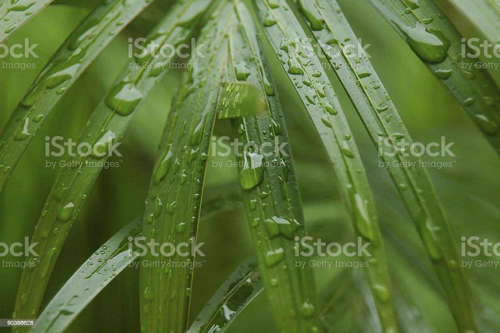 Botanical royalty-free stock photo
