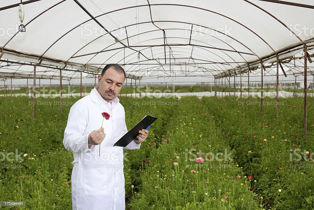 Botanist checking and recording in cut flower greenhouse royalty-free stock photo
