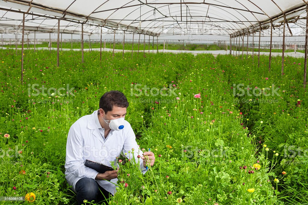 Botanist checking and recording in cut flower greenhouse stock photo