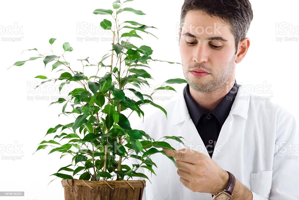Botanist stock photo