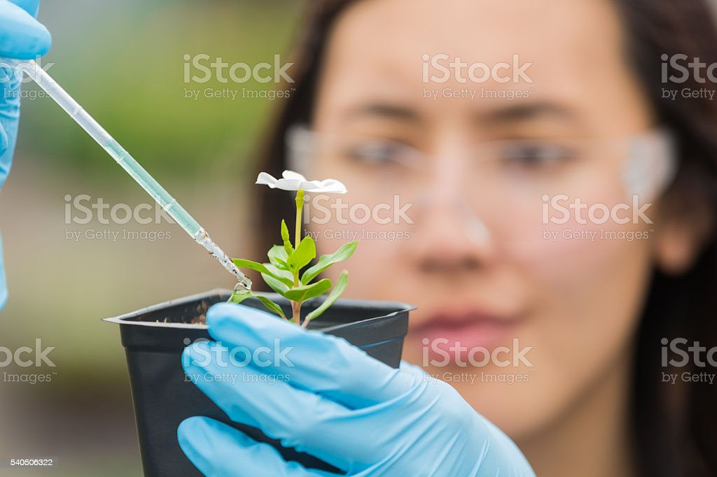 Botanist studying flower stock photo