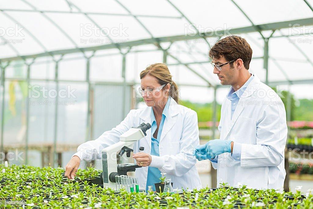 Botanists studying plant life stock photo