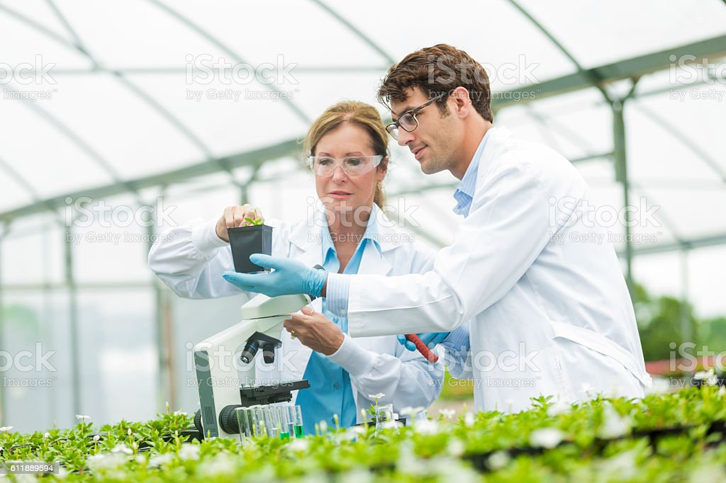 Botanists work together in greenhouse laboratory stock photo