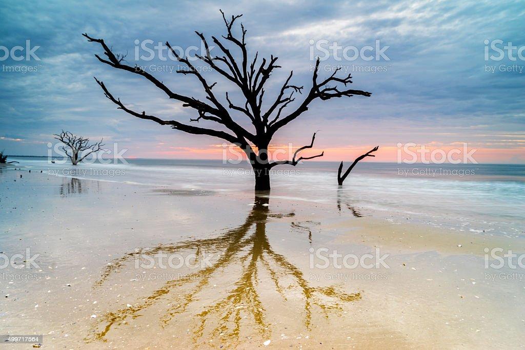 Botany Bay Daybreak royalty-free stock photo