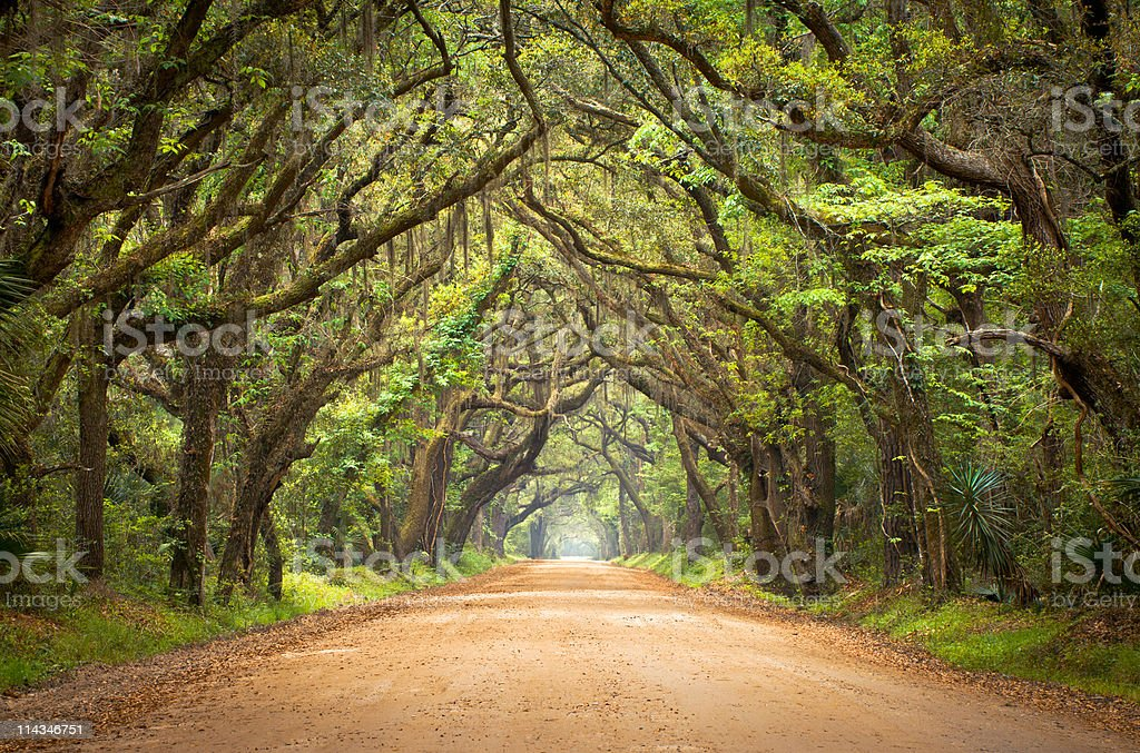 Botany Bay Spooky Dirt Road Creepy Marsh Oak Trees Tunnel stock photo