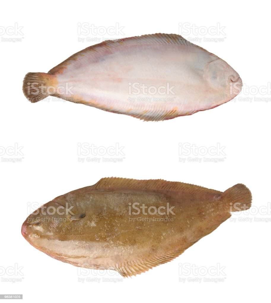 Both Sides of Dover Sole Fish stock photo