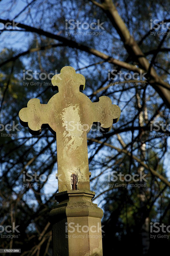 Botonée Cross between trees royalty-free stock photo
