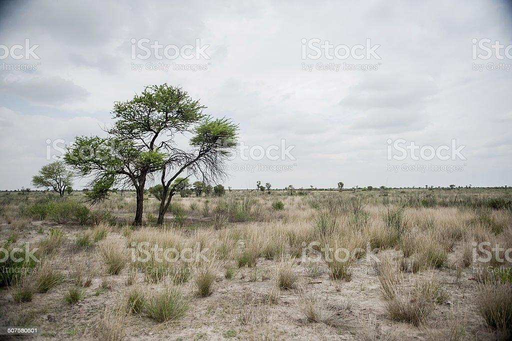 Botswana Landscapes stock photo