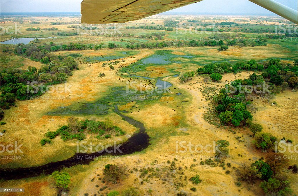 Botswana Panorama: Aerial View of Delta Landscape, Herds of Buffalo stock photo