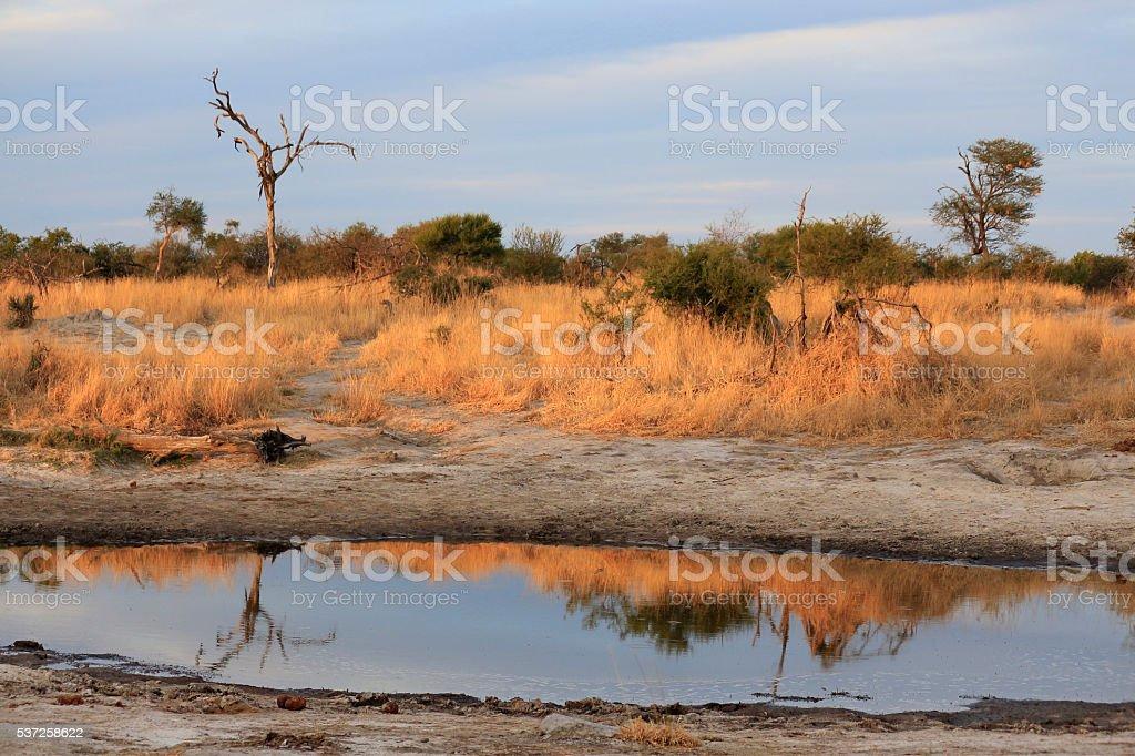Botswana woodland landscape Africa water hole tree savana bush stock photo