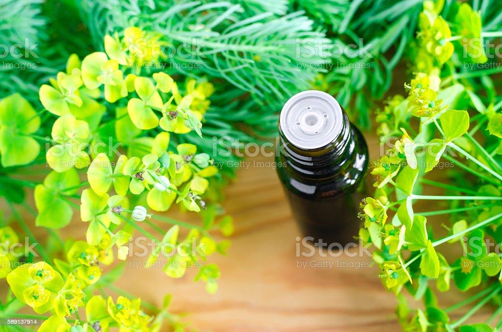 Bottle of euphorbia cyparissias, cypress spurge extract (Milkweed tincture) stock photo