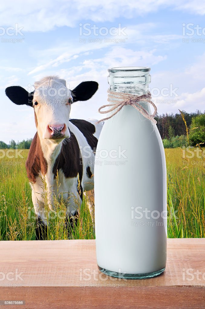 Bottle of milk with cows on the background stock photo