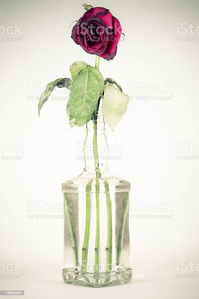 bottle with a wilted rose royalty-free stock photo