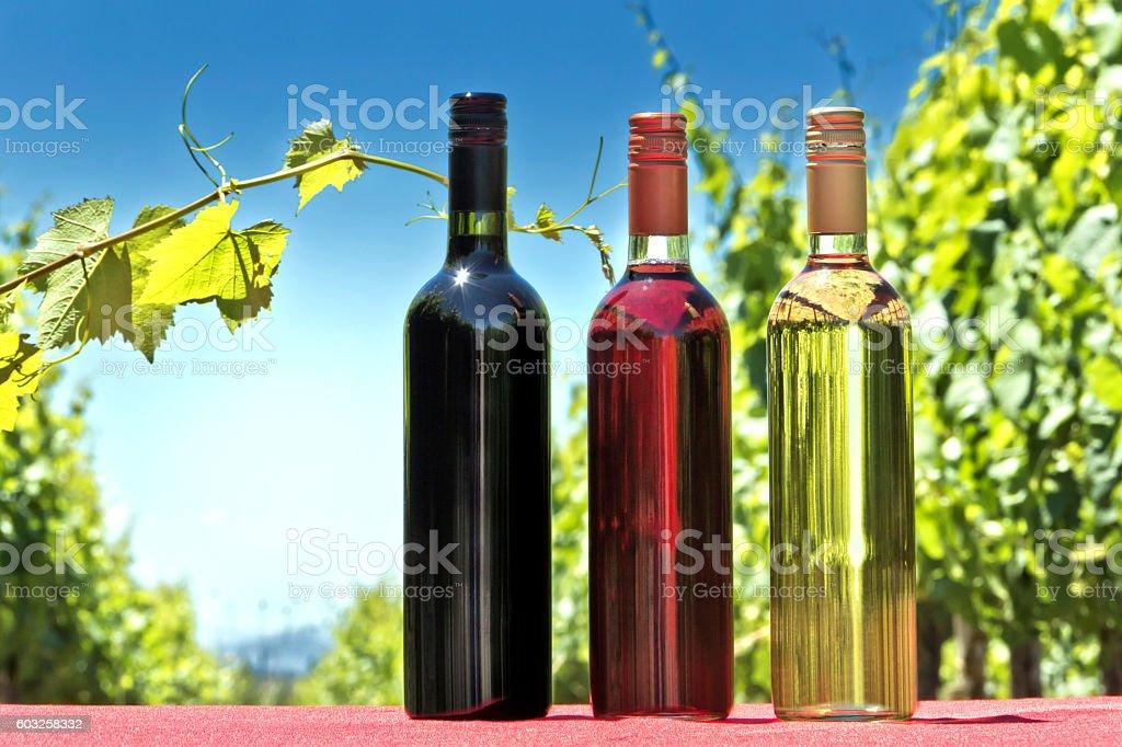 Bottles of wine stock photo