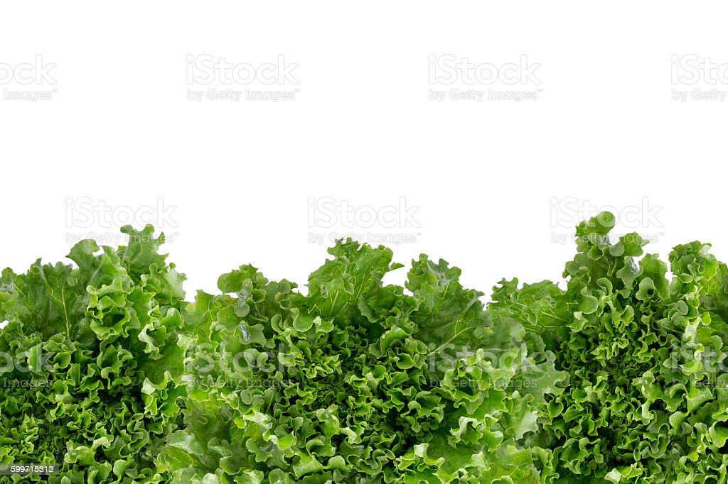 Bottom border of crisp fresh lettuce stock photo