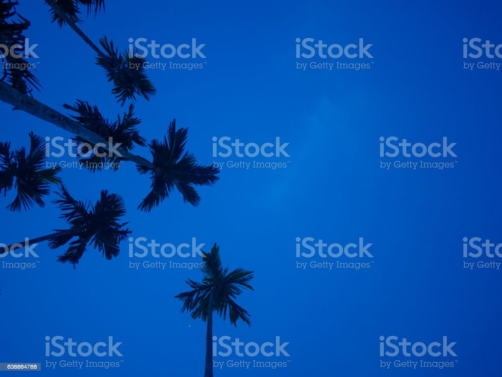 bottom view of betel palm tree stock photo