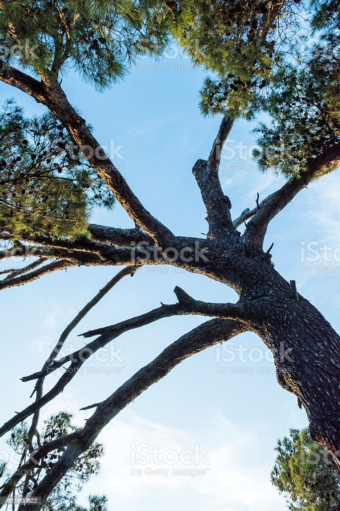 Bottom view of single tree stock photo