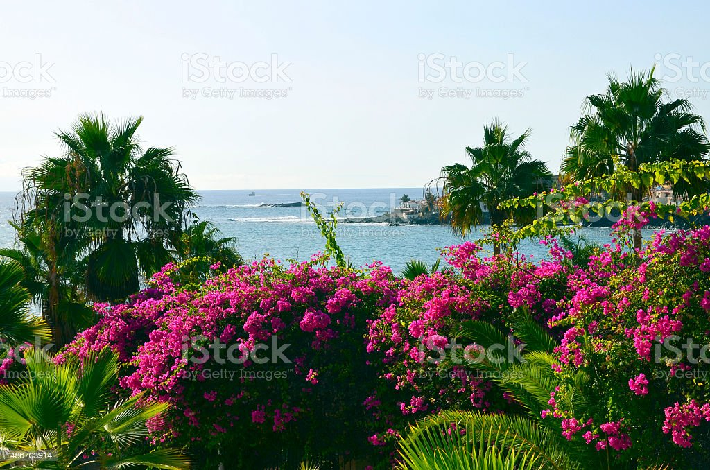 Bougainvillea bushes and palm trees against ocean . stock photo