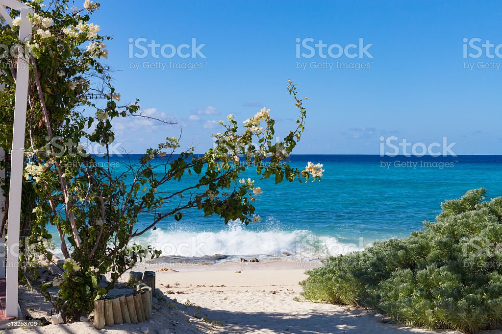 Bougainvillea by the Caribbean, Grand Turk stock photo